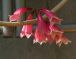 多摩地区の花