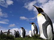 なぜペンギンは空を飛べないのか