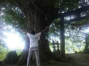 癒しと巨木好き