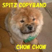 Spitzコピーバンド「CHOW CHOW」
