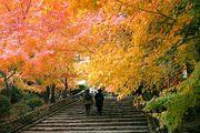 京都大好き地方っ子。