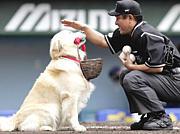 ミッキー君【ベースボール犬】