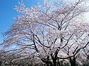 北陸(石川・富山・福井)の求人