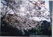 出会いの広場@甲南大学