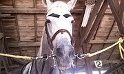 笠松競馬の誘導馬写真雑記