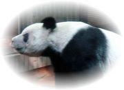 I Love Panda ! I Love Darts !