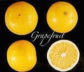 ○Grapefruit○