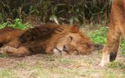 森ライオンズ
