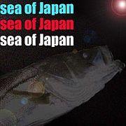 シーバス日本海 sea of Japan