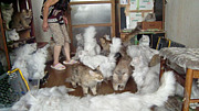 岐阜ふわふわ猫54匹・飼育崩壊