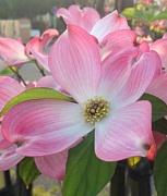 お花が好きだ(*^▽^*)♪
