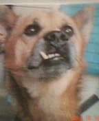 うちのミックス犬、ピエール!