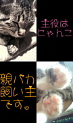 主役はうちの猫ちゃん☆