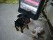 ジモッ子による犬の会