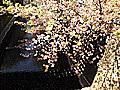 目黒川◆リバーサイド