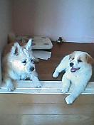 MIX犬大好き♪