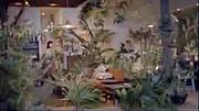 植物まみれの部屋