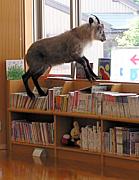 図書館の本を期限内に返せない