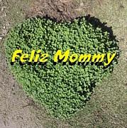 Feliz Mommy