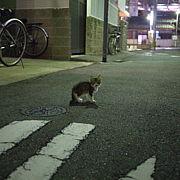 ノラ猫を上手に撮る会
