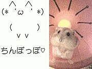 orz=▽・ω・▽=犬