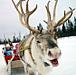 奈良公園から鹿に乗って帰宅する