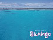 神戸でダイビング ブルミンゴ