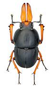 昆虫標本作製技術