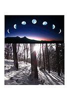 新月の木のセルフビルド