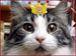 女王様猫・王様猫のシモベ
