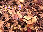 枯れ葉にクラッシュッ!!