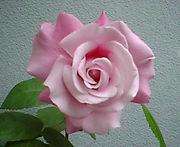 バラを植えましょう