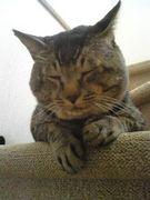 猫大好き(o^-')b