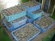 イカナゴ魚醤油