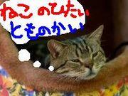 「猫の額」友の会