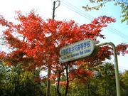 軽井沢高校