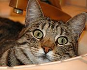 猫ブログ徘徊