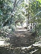 北秋津の森