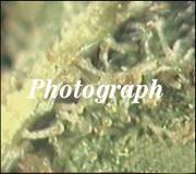 THC-Photograph