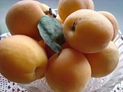 あぷりこっと(Apricot)