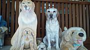 ジャルジャル福徳の愛犬愛する会