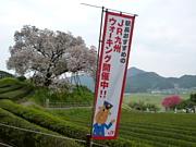 JR九州ウォーク FORGAY