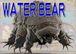 WATER BEAR(熊虫)