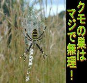 ●クモの巣が苦手●