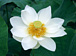 愛と平和〜ヨグマタの教え