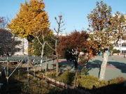 豊島区立要町(要)小学校