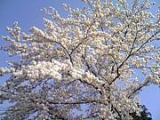 各地の春夏秋冬 四季の景色