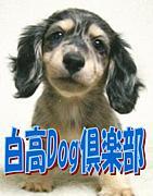 白高Dog倶楽部