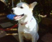 dog paddle ♪犬かき