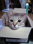 にゃんにゃん箱